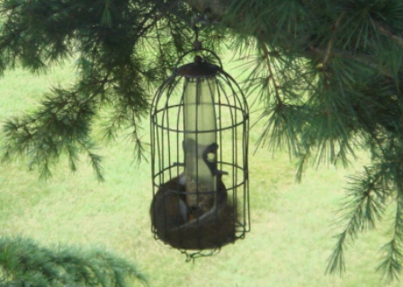 squirrel-bird-feeder.jpg